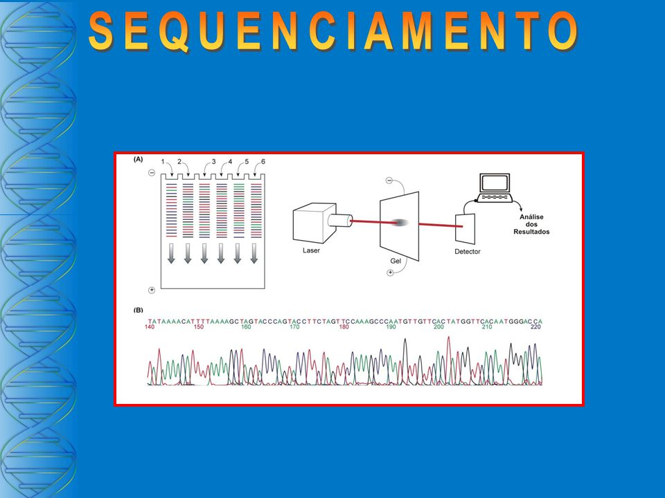 DNA Fita Simples 5353 3535 Fragmentos maiores Fragmentos menores 3 5 Eletroforese Complementaridade de Cadeias