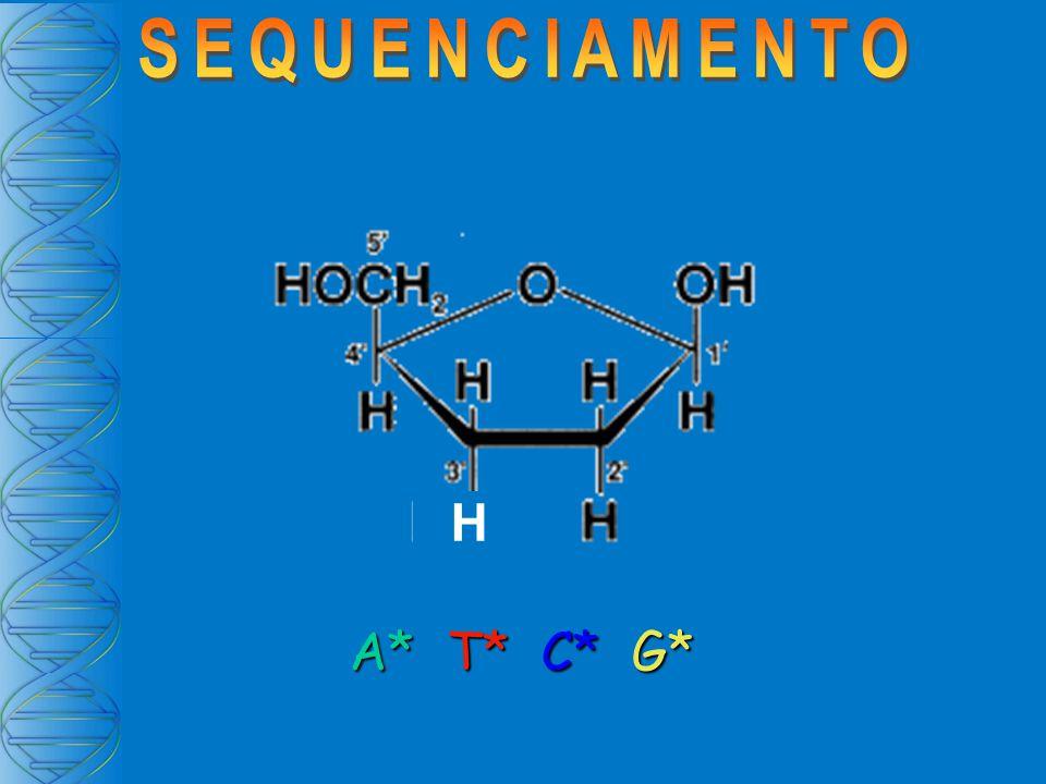 RNA cDNA DNA