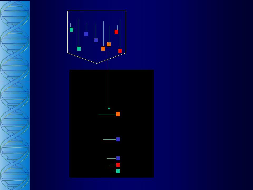 Genes Estruturais Genes Regulatórios Genes Estruturais Genes Regulatórios