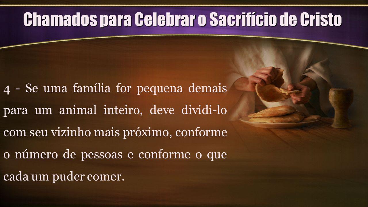 Chamados para Celebrar o Sacrifício de Cristo 4 - Se uma família for pequena demais para um animal inteiro, deve dividi-lo com seu vizinho mais próxim