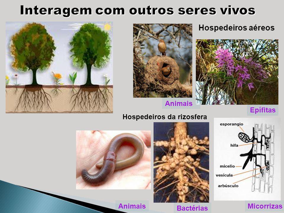 Animais Epífitas Hospedeiros aéreos Hospedeiros da rizosfera Bactérias MicorrizasAnimais