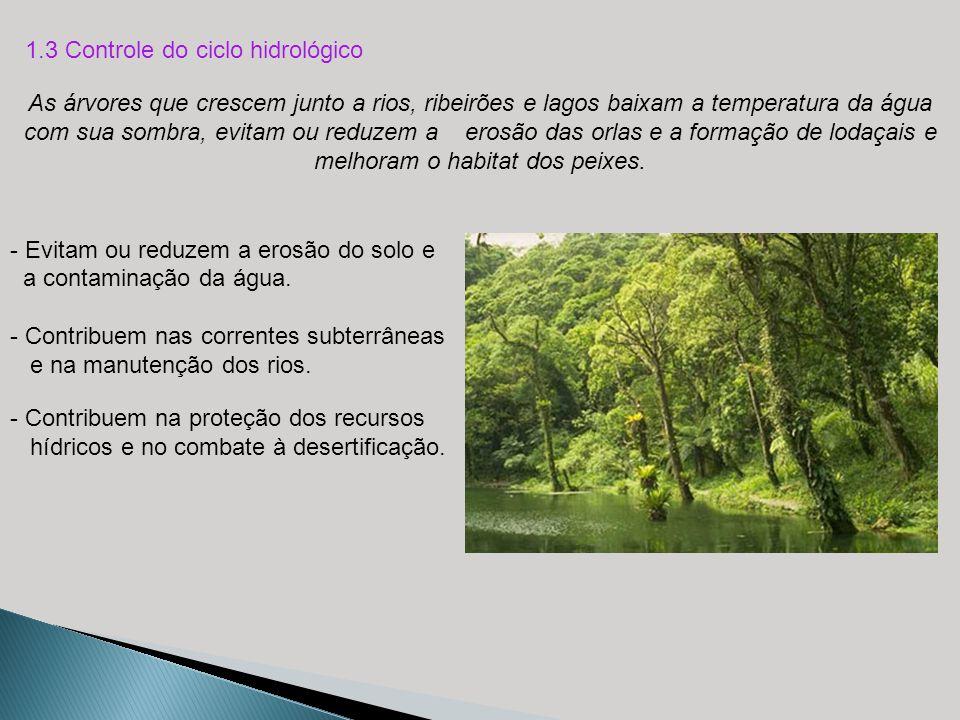 - Evitam ou reduzem a erosão do solo e a contaminação da água. - Contribuem nas correntes subterrâneas e na manutenção dos rios. As árvores que cresce