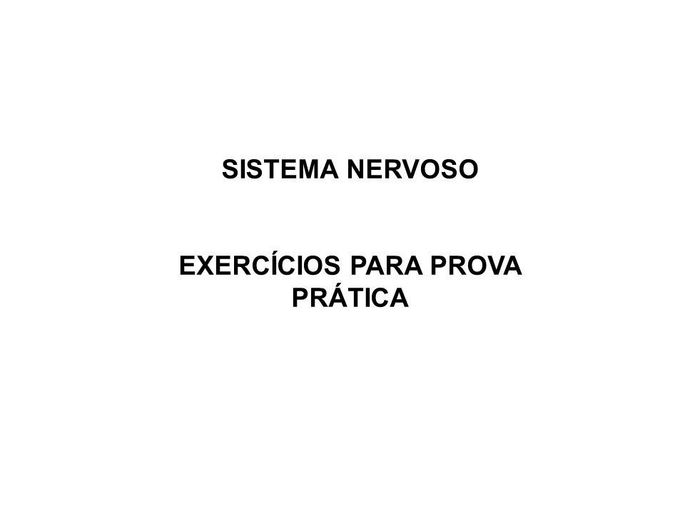 SISTEMA NERVOSO EXERCÍCIOS PARA PROVA PRÁTICA