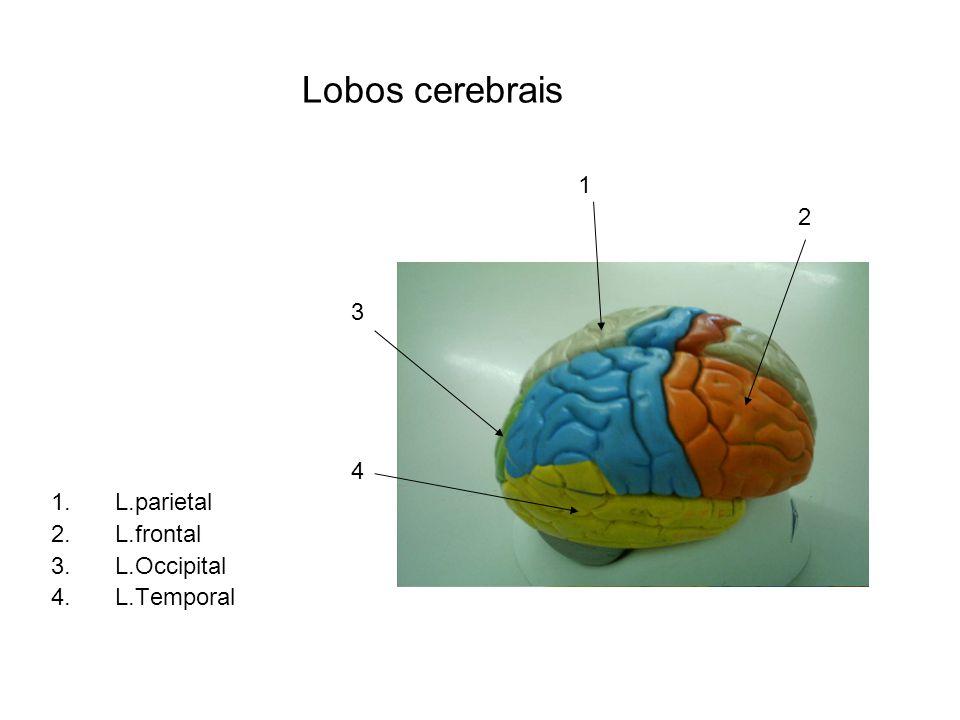 1 2 3 4 5 6 7 8 9 1.Nervo espinhal 2.Gânglio sensitivo da raiz dorsal do nervo espinhal 3.Raiz dorsal do nervo espinhal.