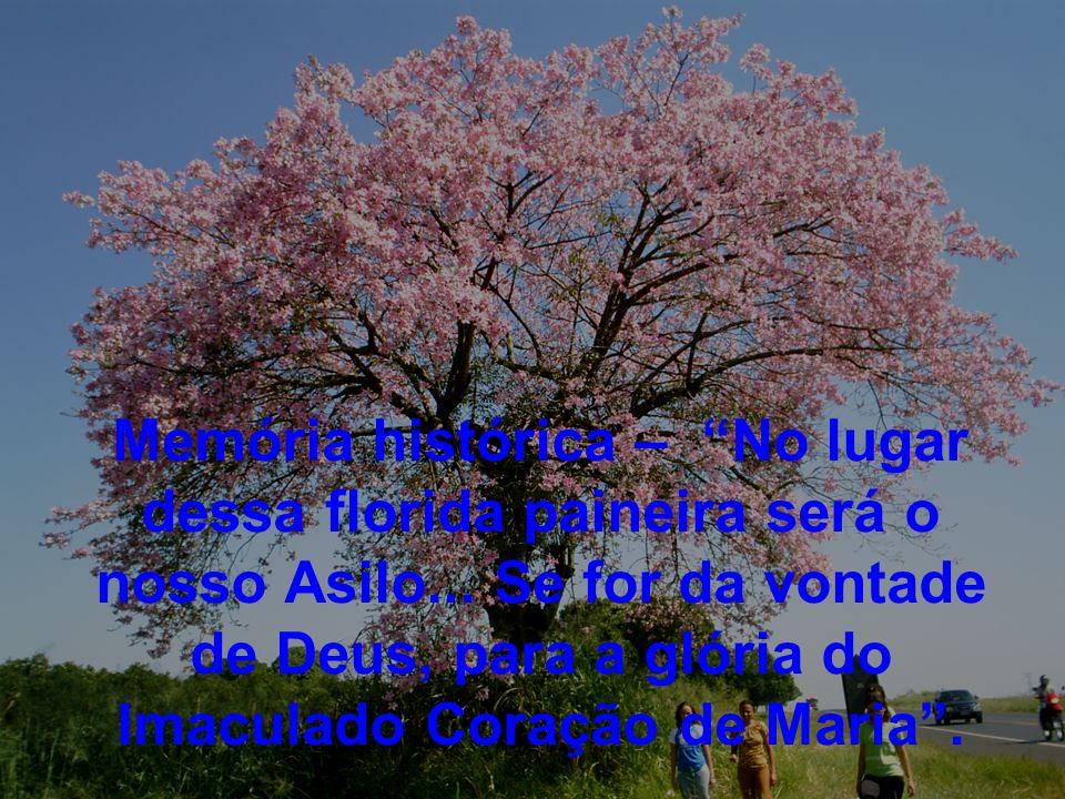 Memória histórica – No lugar dessa florida paineira será o nosso Asilo... Se for da vontade de Deus, para a glória do Imaculado Coração de Maria.