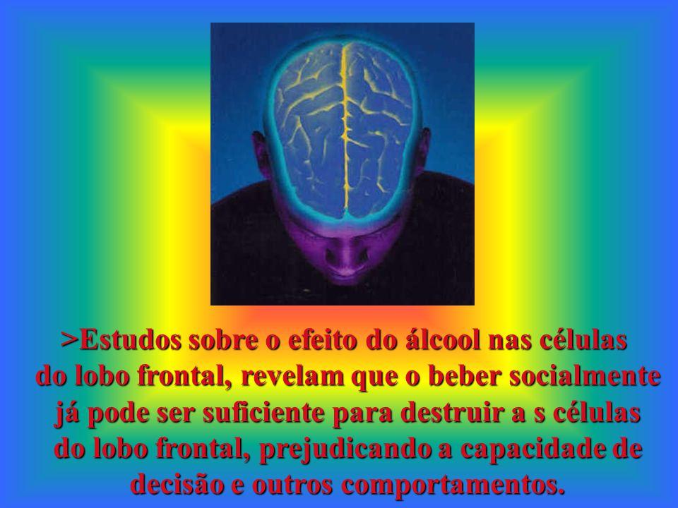 >Estudos sobre o efeito do álcool nas células do lobo frontal, revelam que o beber socialmente já pode ser suficiente para destruir a s células do lob