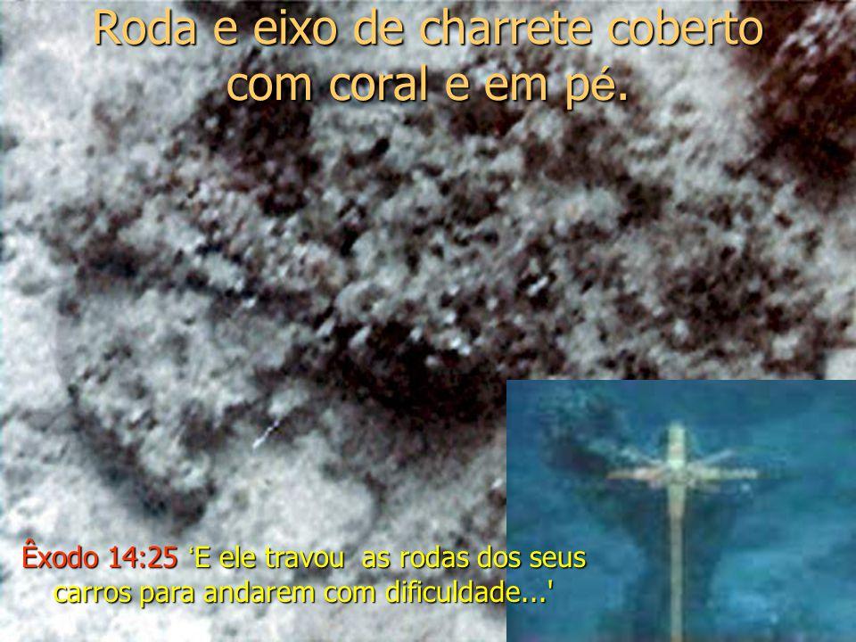 Roda e eixo de charrete coberto com coral e em p é.