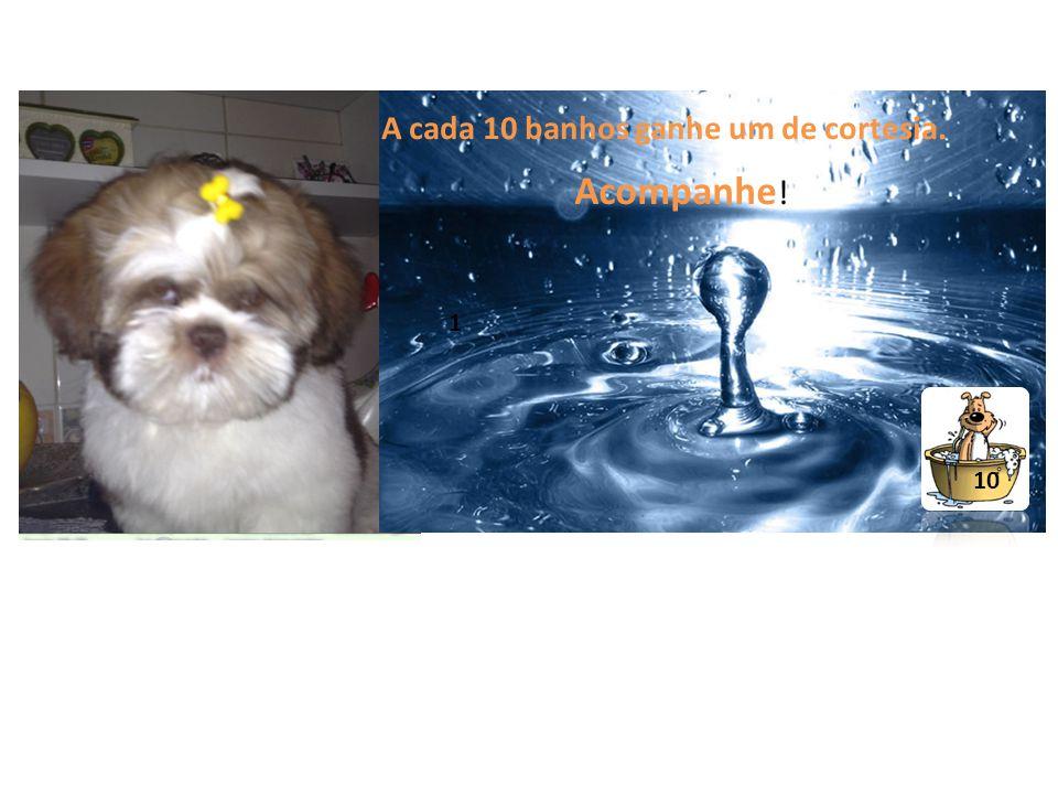 A cada 10 banhos ganhe um de cortesia. Acompanhe ! 10 1