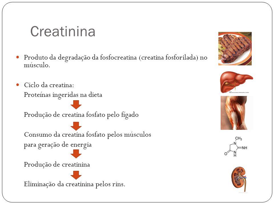 Produto da degradação da fosfocreatina (creatina fosforilada) no músculo. Ciclo da creatina: Proteínas ingeridas na dieta Produção de creatina fosfato