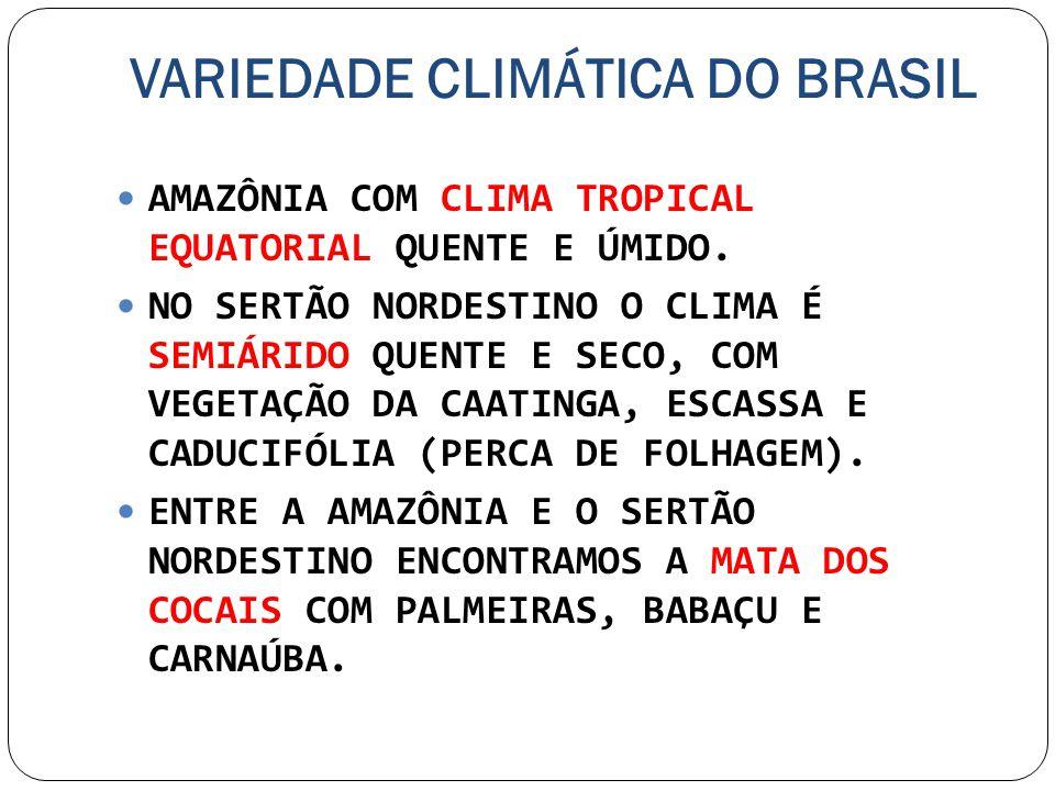 VARIEDADE CLIMÁTICA DO BRASIL AMAZÔNIA COM CLIMA TROPICAL EQUATORIAL QUENTE E ÚMIDO. NO SERTÃO NORDESTINO O CLIMA É SEMIÁRIDO QUENTE E SECO, COM VEGET