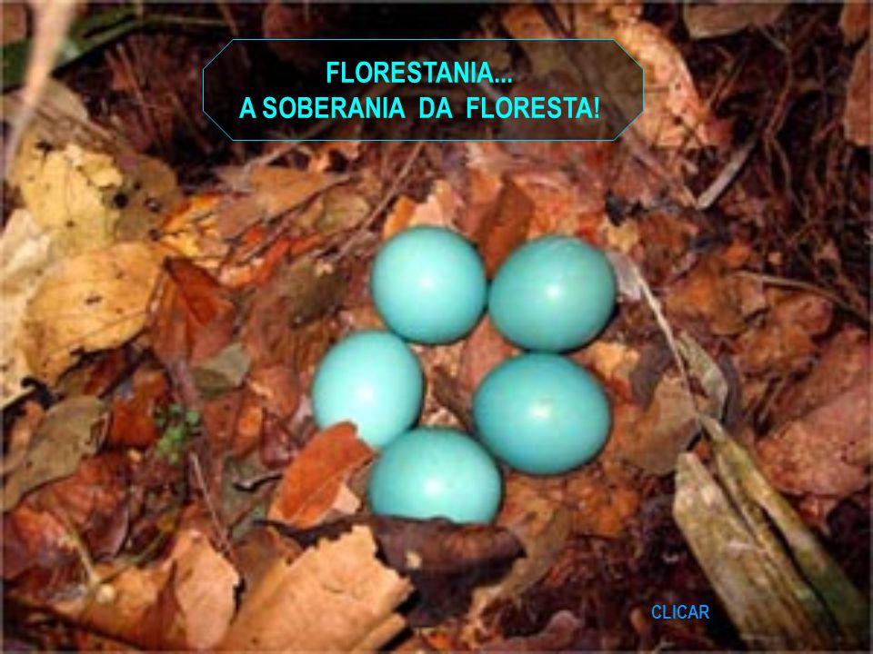 FLORESTANIA... A SOBERANIA DA FLORESTA! CLICAR