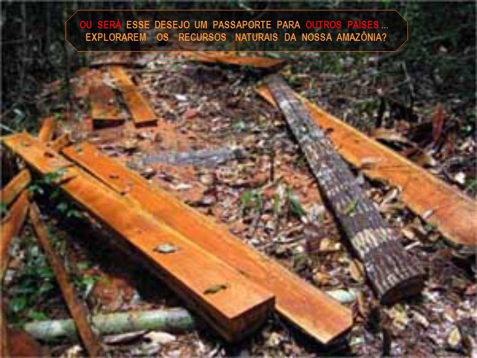 Texto e formatação - rose.acaciana@gmail.com Pesquisa – Roberto Gama e Silva Fotos da Amazônia