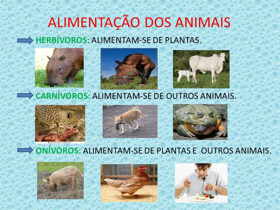 ALIMENTAÇÃO DOS ANIMAIS HERBÍVOROS: ALIMENTAM-SE DE PLANTAS. CARNÍVOROS: ALIMENTAM-SE DE OUTROS ANIMAIS. ONÍVOROS: ALIMENTAM-SE DE PLANTAS E OUTROS AN