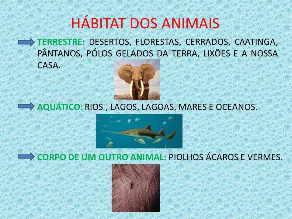HÁBITAT DOS ANIMAIS TERRESTRE: DESERTOS, FLORESTAS, CERRADOS, CAATINGA, PÂNTANOS, PÓLOS GELADOS DA TERRA, LIXÕES E A NOSSA CASA. AQUÁTICO: RIOS, LAGOS