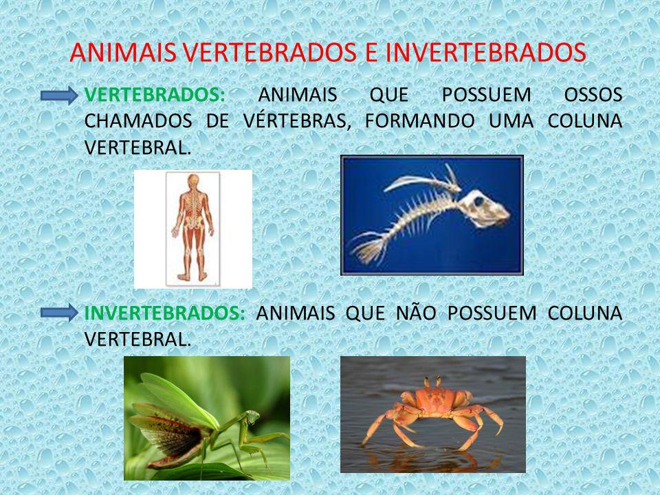 ANIMAIS VERTEBRADOS E INVERTEBRADOS VERTEBRADOS: ANIMAIS QUE POSSUEM OSSOS CHAMADOS DE VÉRTEBRAS, FORMANDO UMA COLUNA VERTEBRAL. INVERTEBRADOS: ANIMAI