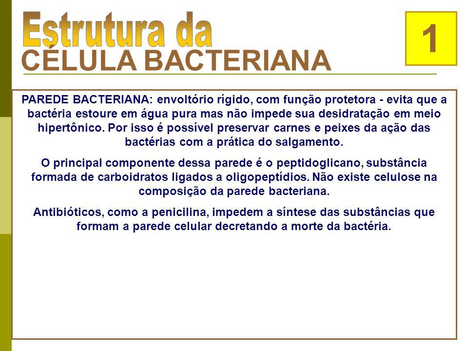 Helicobacter pylori bactéria acusada de provocar úlceras gástricas Revista Super Interessante
