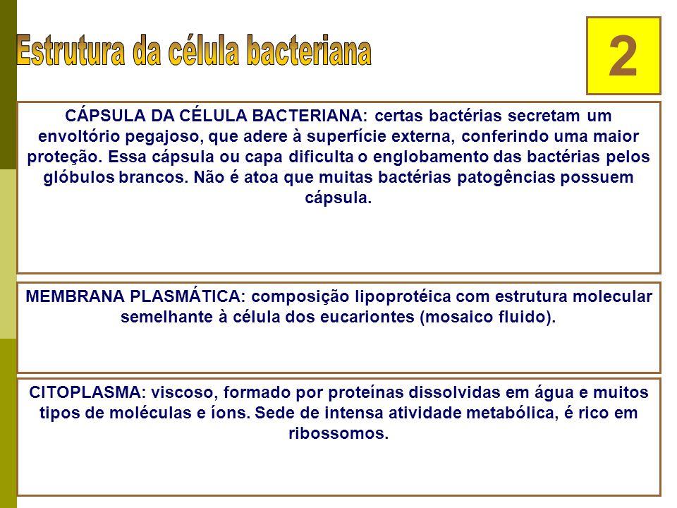 CÉLULA BACTERIANA 1 PAREDE BACTERIANA: envoltório rígido, com função protetora - evita que a bactéria estoure em água pura mas não impede sua desidrat