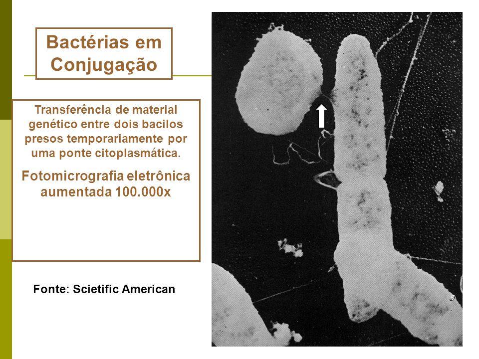 As células procariontes não se dividem por mitose e seus filamentos de DNA não sofrem o processo de condensação que leva à formação de cromossomos vis