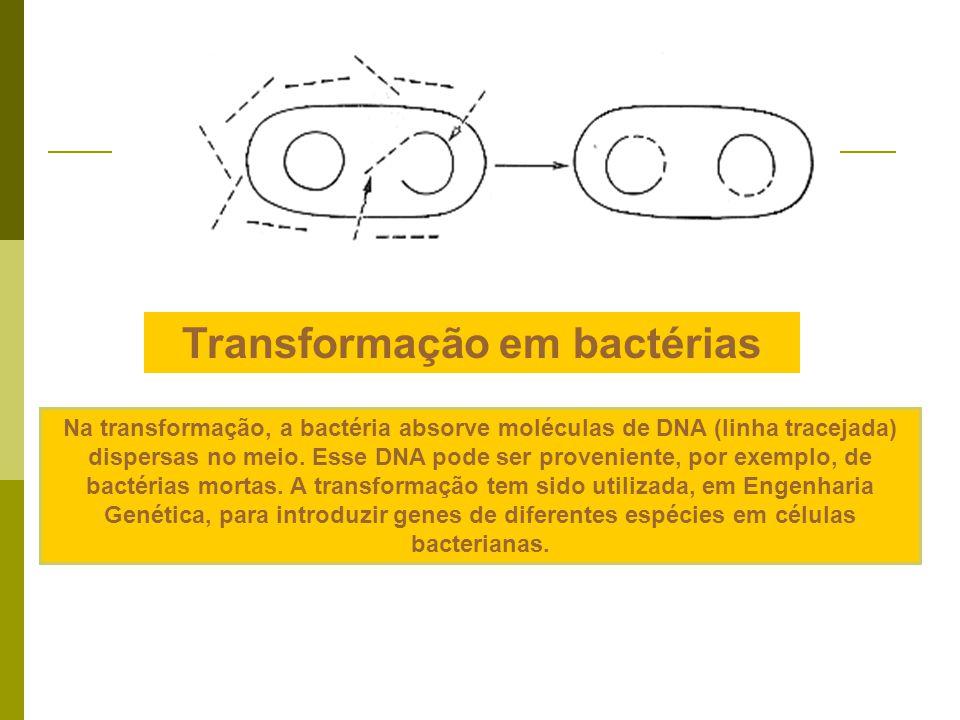 Na transdução, moléculas de DNA são transferidas de uma bactéria (A) a outra (E) usando vírus como vetores. Estes, ao se formar (C), podem eventualmen