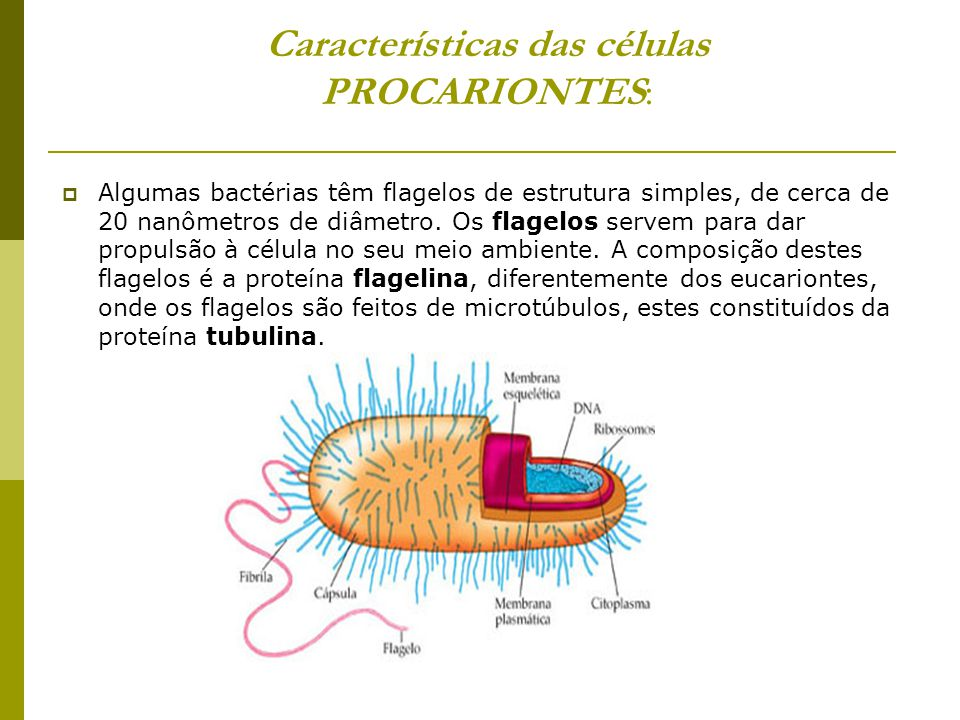A forma simples das células procariontes, que em geral é em bastonete ou esférica, é mantida pelaé parede extracelular, sintetizada no citoplasma e ag