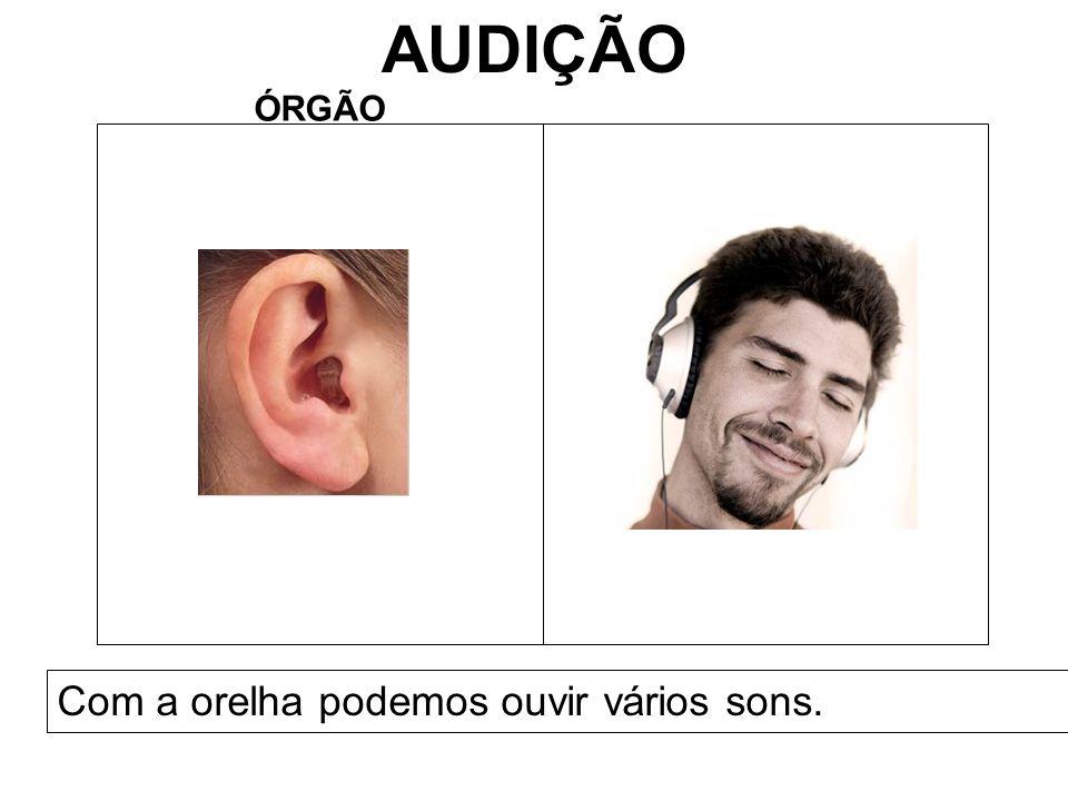 AUDIÇÃO ÓRGÃO Com a orelha podemos ouvir vários sons.