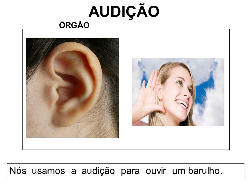 AUDIÇÃO ÓRGÃO Nós usamos a audição para ouvir um barulho.