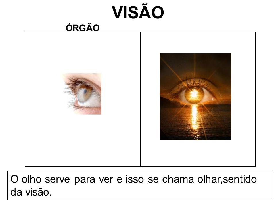 VISÃO ÓRGÃO O olho serve para ver e isso se chama olhar,sentido da visão.