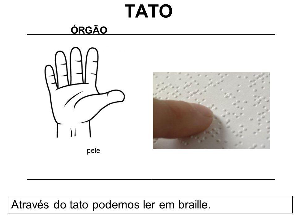 TATO ÓRGÃO Através do tato podemos ler em braille. pele