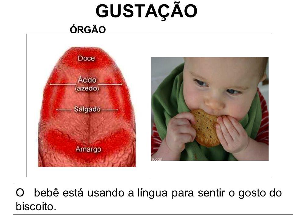 GUSTAÇÃO ÓRGÃO O bebê está usando a língua para sentir o gosto do biscoito.