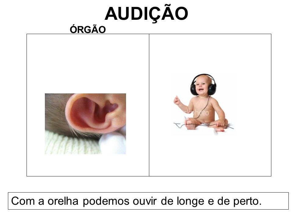 AUDIÇÃO ÓRGÃO Com a orelha podemos ouvir de longe e de perto.