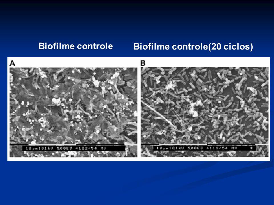 Biofilme controle Biofilme controle(20 ciclos)
