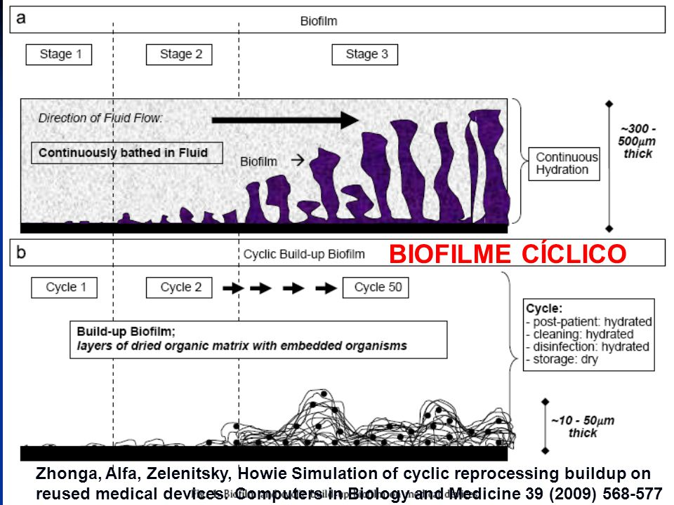 BIOFILME CÍCLICO Zhonga, Alfa, Zelenitsky, Howie Simulation of cyclic reprocessing buildup on reused medical devices.