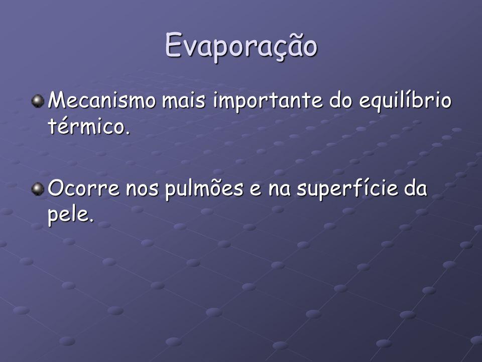 Evaporação Mecanismo mais importante do equilíbrio térmico. Ocorre nos pulmões e na superfície da pele.