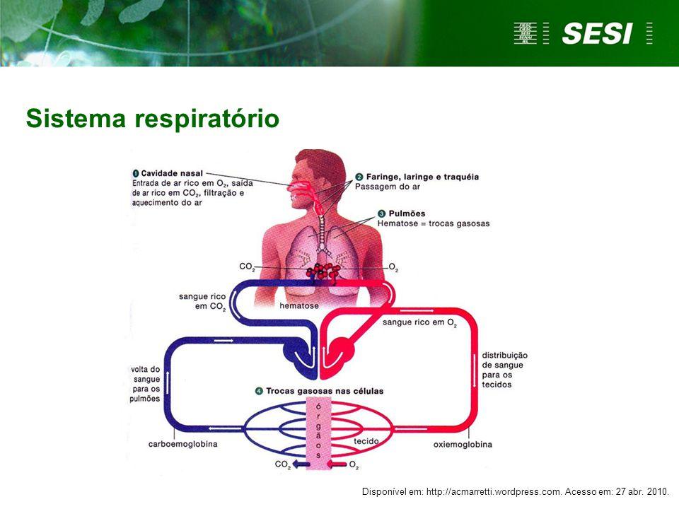 Sistema respiratório Disponível em: http://acmarretti.wordpress.com. Acesso em: 27 abr. 2010.
