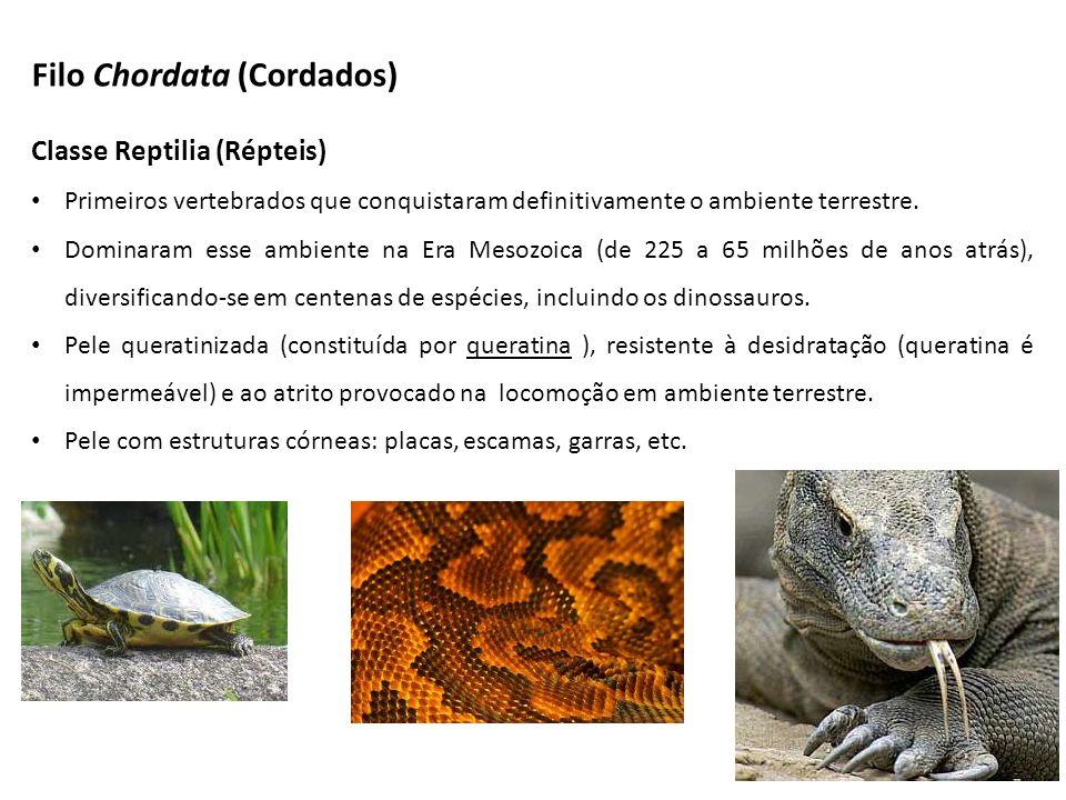 Classe Reptilia (Répteis) Primeiros vertebrados que conquistaram definitivamente o ambiente terrestre.