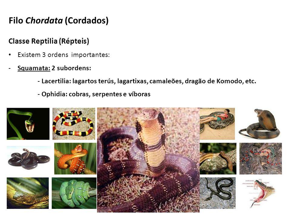Classe Reptilia (Répteis) Existem 3 ordens importantes: -Squamata: 2 subordens: - Lacertilia: lagartos terús, lagartixas, camaleões, dragão de Komodo,