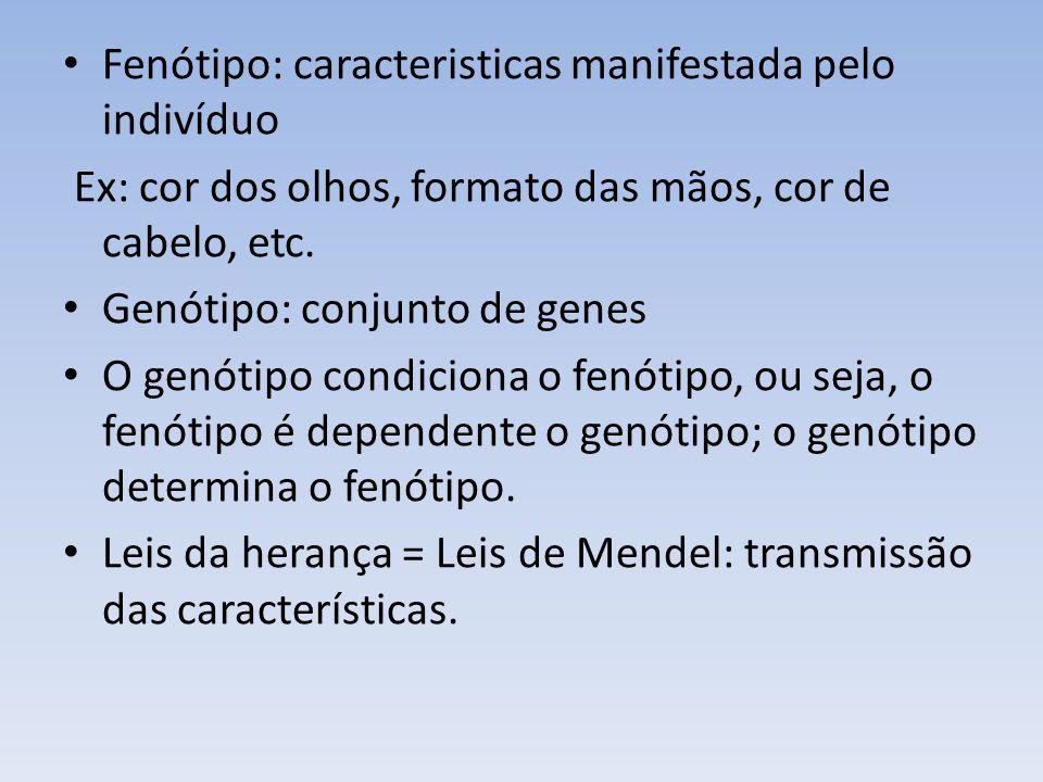 Fenótipo: caracteristicas manifestada pelo indivíduo Ex: cor dos olhos, formato das mãos, cor de cabelo, etc. Genótipo: conjunto de genes O genótipo c