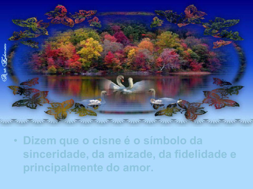 Lembrei-me que o amor é soberano e está em todos os lugares, até naquele lago, que dei o nome de lago de amor dos cisnes.