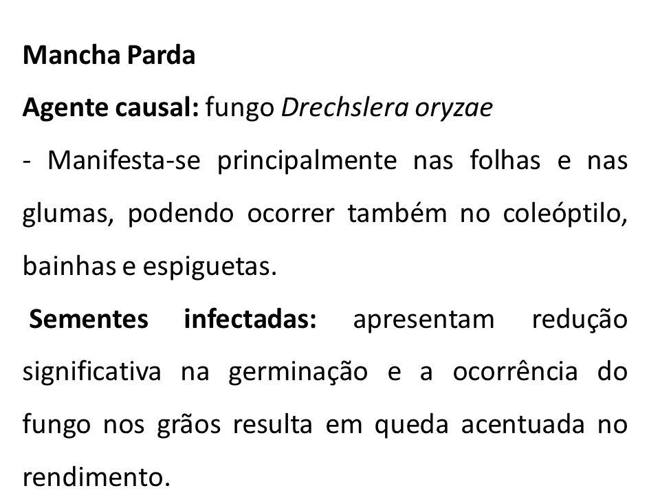 Mancha Parda Agente causal: fungo Drechslera oryzae - Manifesta-se principalmente nas folhas e nas glumas, podendo ocorrer também no coleóptilo, bainh