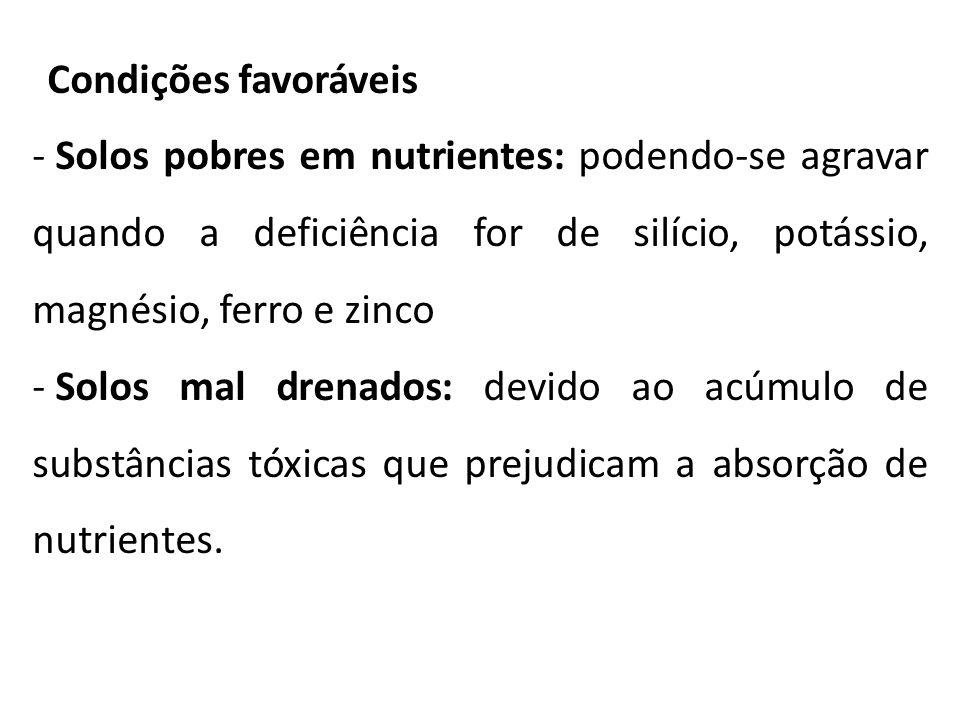 Condições favoráveis - Solos pobres em nutrientes: podendo-se agravar quando a deficiência for de silício, potássio, magnésio, ferro e zinco - Solos m