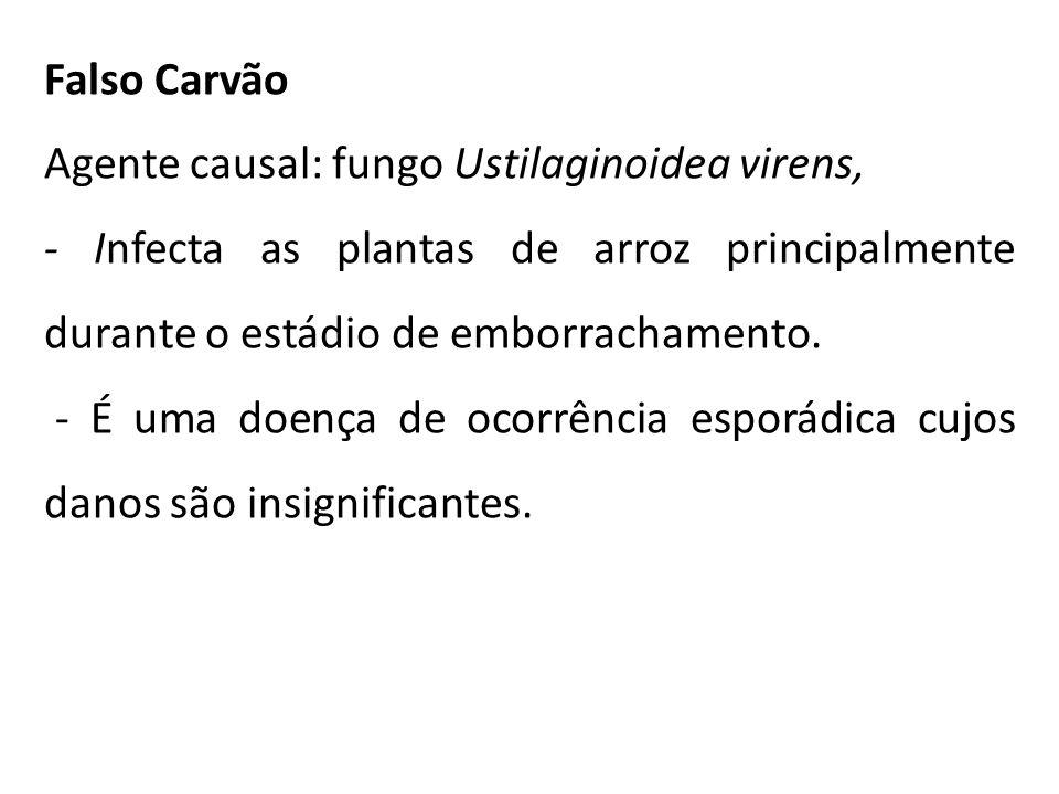 Falso Carvão Agente causal: fungo Ustilaginoidea virens, - Infecta as plantas de arroz principalmente durante o estádio de emborrachamento. - É uma do