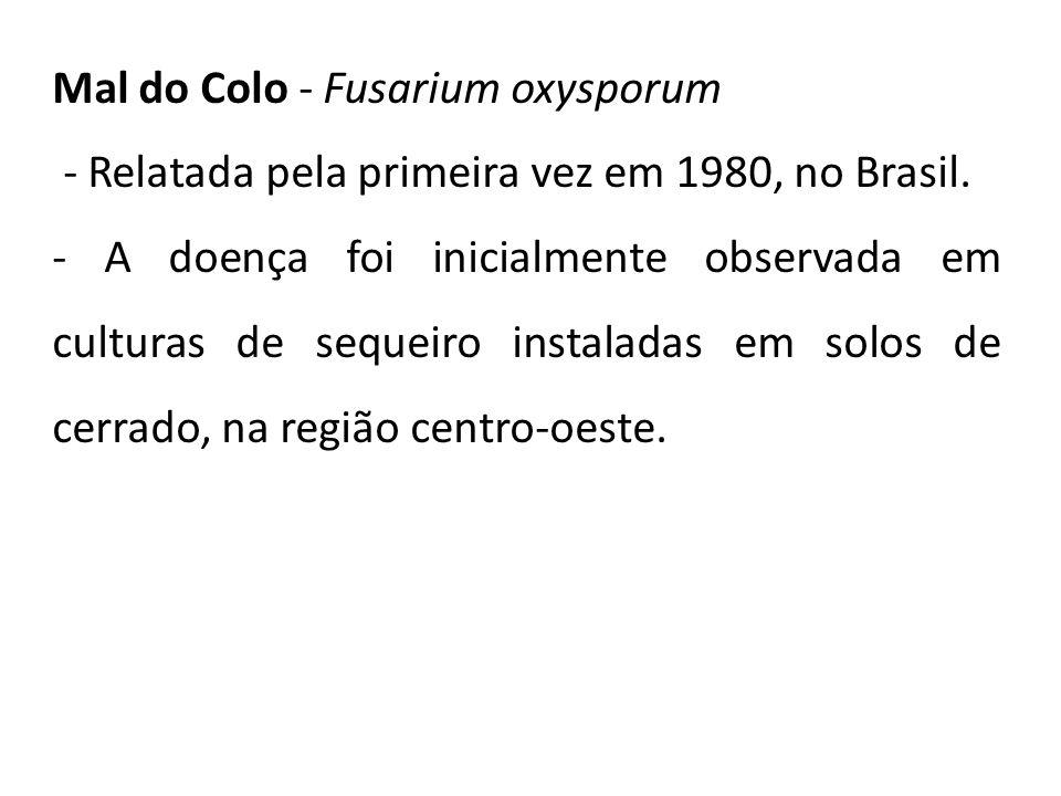 Mal do Colo - Fusarium oxysporum - Relatada pela primeira vez em 1980, no Brasil. - A doença foi inicialmente observada em culturas de sequeiro instal