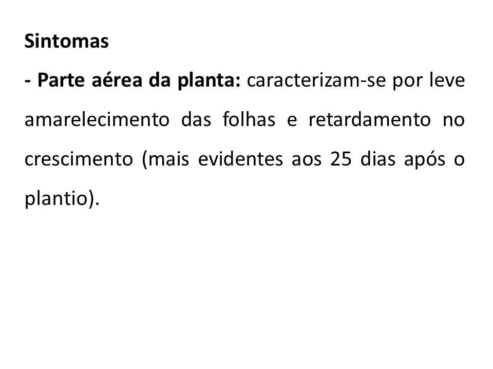 Sintomas - Parte aérea da planta: caracterizam-se por leve amarelecimento das folhas e retardamento no crescimento (mais evidentes aos 25 dias após o