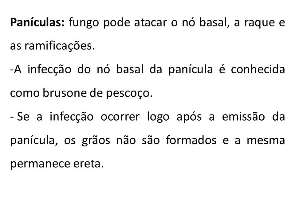 Mal do Colo - Fusarium oxysporum - Relatada pela primeira vez em 1980, no Brasil.