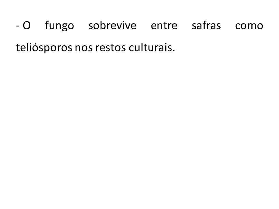 - O fungo sobrevive entre safras como teliósporos nos restos culturais.