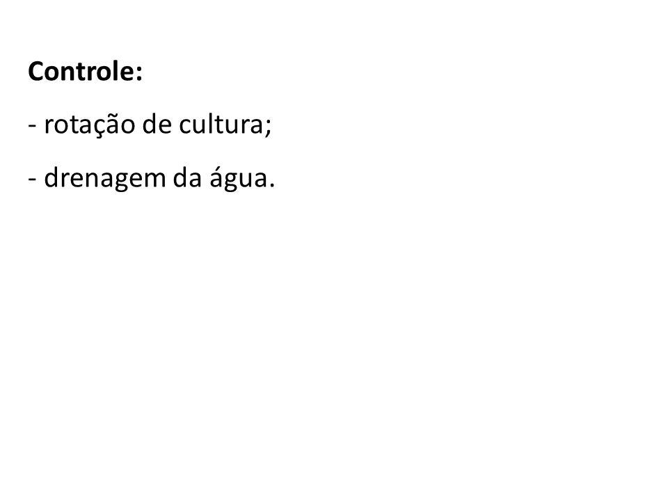 Controle: - rotação de cultura; - drenagem da água.