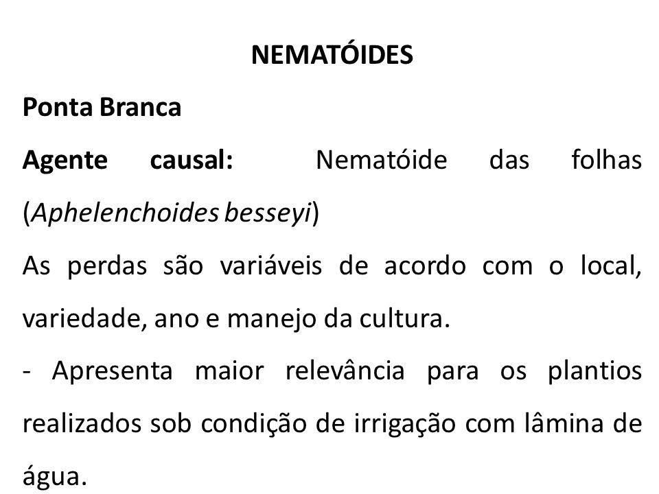 NEMATÓIDES Ponta Branca Agente causal: Nematóide das folhas (Aphelenchoides besseyi) As perdas são variáveis de acordo com o local, variedade, ano e m