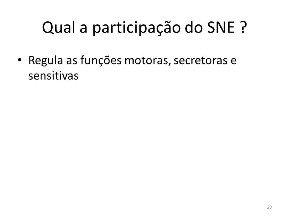 Qual a participação do SNE ? Regula as funções motoras, secretoras e sensitivas 20