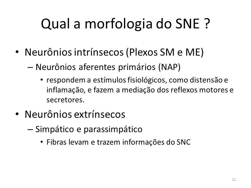 Qual a morfologia do SNE .