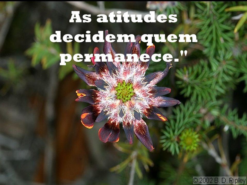 O destino decide quem entra em nossas vidas...